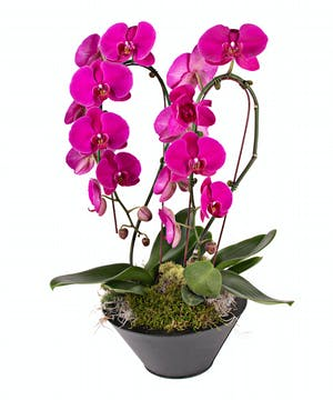 Deluxe Waterfall Orchid