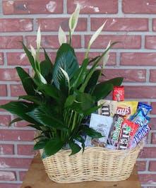 Beautiful plant and yummy snacks!