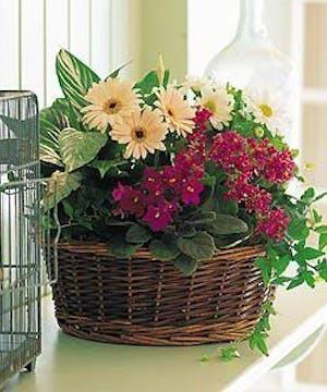 A pretty garden basket