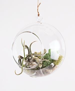Hanging Airplant Globe