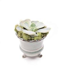 Stunning Succulent