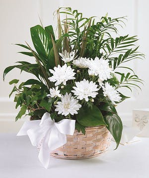 A basket of lush green plants!