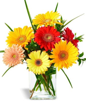 Warning! Gerbera Daisies may cause Happiness!