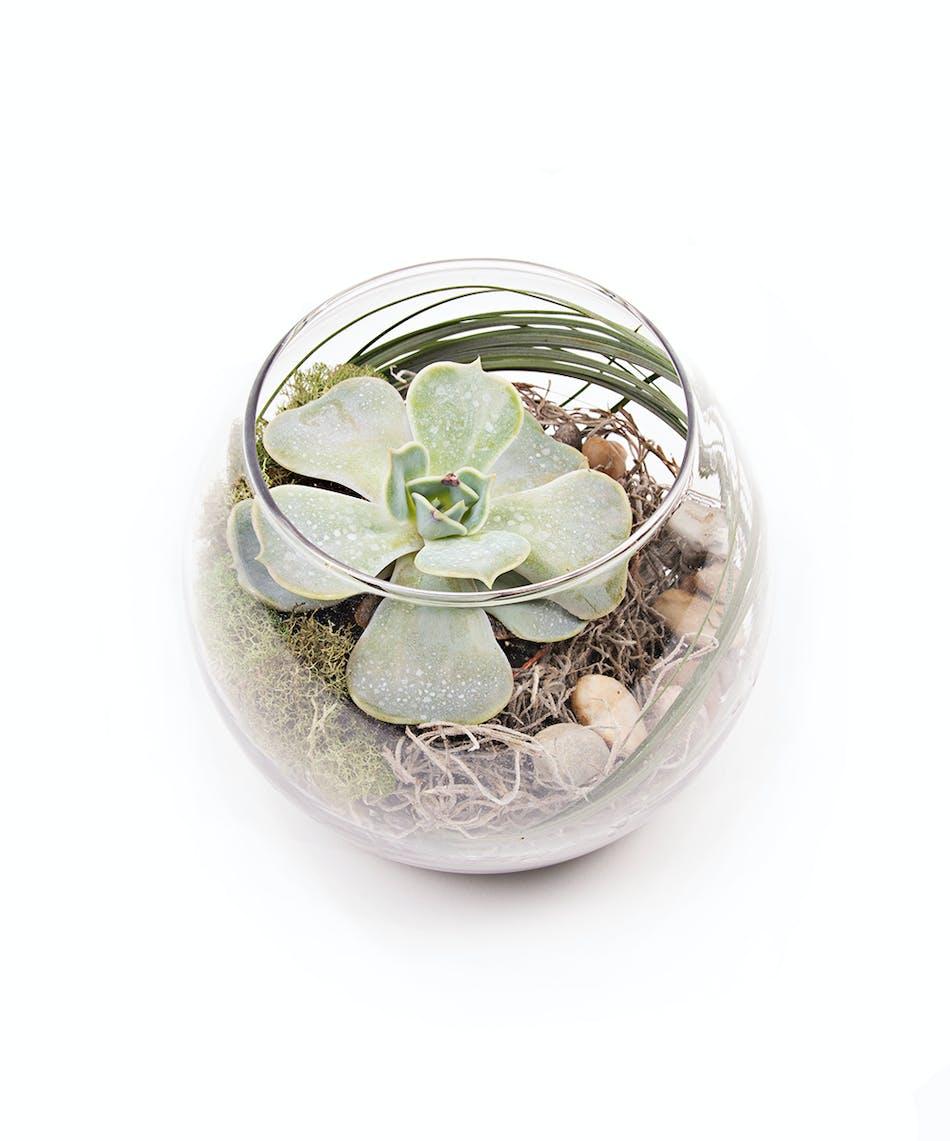 Succulent Terarium Vogts Flowers Flint Flowers